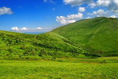 Green lush mountain valley with pathway. And small fir trees. Blue cloudy sky in sunny day Royalty Free Stock Image