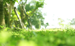 Green lush plant field with blur bokeh and half white copy space Royalty Free Stock Photo