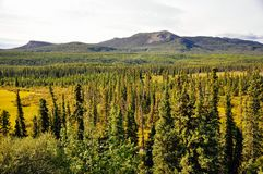 The rolling landscape of the Yukon, Canada. The green and lush rolling landscape of the Yukon, Canada stock images