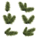Green lush spruce branches for Christmas background. Vector illustration.  Royalty Free Stock Image