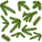 Fir branches isolated on white background. Green lush spruce branches. Fir branches illustration isolated on white background Royalty Free Stock Images