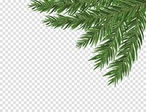 Green lush spruce or pine branch. Fir tree branch isolated on white vector christmas element.  Royalty Free Stock Image