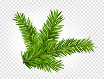 Green lush spruce or pine branch. Fir tree branch isolated on white vector christmas element.  Stock Images
