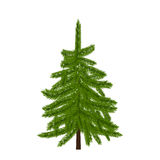 Green lush spruce, pine or fir tree. Fir branches.  on white illustration. Green lush spruce, pine or fir tree. Fir branches.  on white vector illustration Royalty Free Stock Image