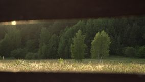 Green, lush summer trees at warm sunset evening. Golden hour sun light shines in the field at the edge of the forest. Lush foliage. Landscape at sunset stock footage