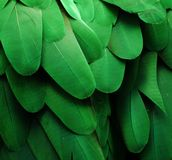Green Macaw Feathers. Macro photo of green macaw feathers Stock Photography