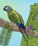 Green macaw parrot on branch. Vector Tropical background with leaves Royalty Free Stock Image