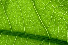 Green macro closeup leaf Royalty Free Stock Photo
