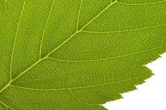 Green macro leaf Royalty Free Stock Photos