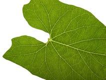 Green macro leaf Stock Photos