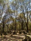 Wild Natur. Green, magic natur, life stock image