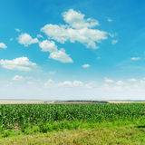 Green maize field and blue sky Stock Photography