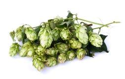 Green malt grape Stock Photo