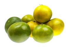 Green mandarin Royalty Free Stock Photography