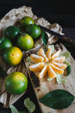 Green Mandarins Royalty Free Stock Photo
