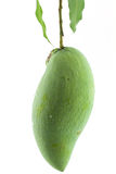 green mango Arkivbild