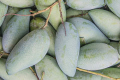 Green Mango backgorund. Young green mango in box background Royalty Free Stock Photography
