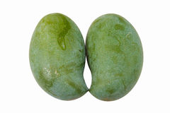Green mango isolated white background. Fruit of Thailand Stock Image