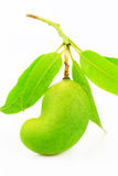 Green mango isolated on white background, popular or international fruit, healthy fruit Royalty Free Stock Photos