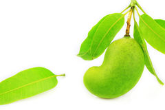 Green mango isolated on white background, popular or international fruit, healthy fruit Stock Images