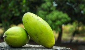Green Mango. Two mango on cement floor stock image