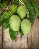 Green mango on wood background. Green mango on a wood background Royalty Free Stock Images