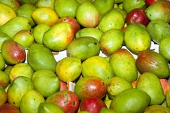 Green mangoes Stock Photos