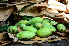 Green mangoes on dry leafs Stock Photo