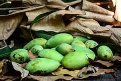 Green mangoes on dry leafs Stock Images