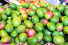 Green mangoes Stock Images