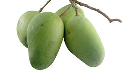 Green mangoes Stock Image