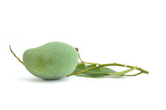 Green mangoes with leafs isolated on white Royalty Free Stock Images