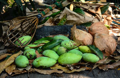 Green mangoes with long-handled fruit-pickeron and coconuts dry leafs Stock Photos