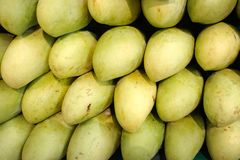 Mangoes in the market. Green mangoes in the market Royalty Free Stock Image