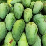 Green mangoes Royalty Free Stock Images