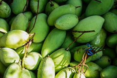Green mangoes Royalty Free Stock Photo