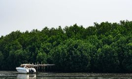 Green mangrove forest and white boat at seashore with clear whit. E sky Stock Photo