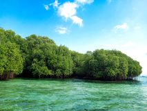 Green Mangrove Forrest by the Sea in Nusa Lembongan island, Bali royalty free stock image