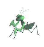 Green mantis 3 D object Stock Photos