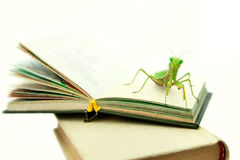 Green mantis on an old book, close up, selective focus. Mantodea Royalty Free Stock Photography