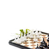 Green mantis playing chess on the chess board, close up, selecti Stock Photography