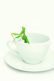 Green Mantis is posing on a white porcelain cup, close up, selec. Tive focus. Mantodea, Mantopter. Concept of good morning, surprise, gift Royalty Free Stock Image