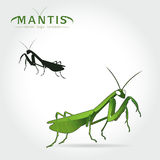 Green Mantis Vector Royalty Free Stock Images
