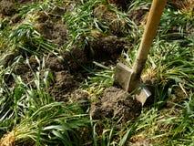 Green manure