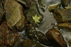 Green maple leaf on cold river Royalty Free Stock Photos