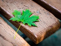 Green maple leaf on an old bench in a park close-up. Green maple leaf on an old bench in a park royalty free stock photos