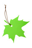 Green maple leaf tag Stock Image