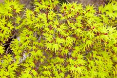 Green maple leaf. Use for background Stock Photography