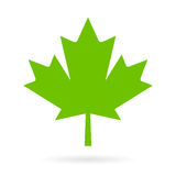 Green maple leaf vector icon Royalty Free Stock Photo