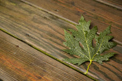 Green Maple Leaf on wet wood boards Stock Image